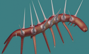 picture of hallucigenia