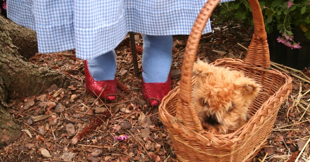 "Dorothy's ruby slippers and dog, Toto, from ""The Wizard of Oz."""