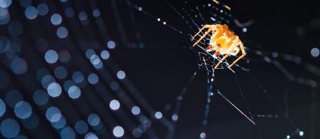 An orange spider on a backlit cobweb.