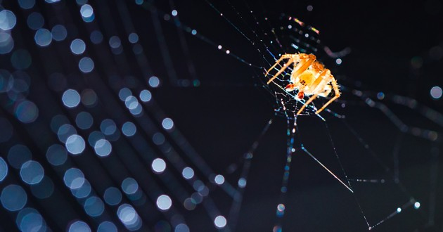 An orange spider on a backlit cobweb.