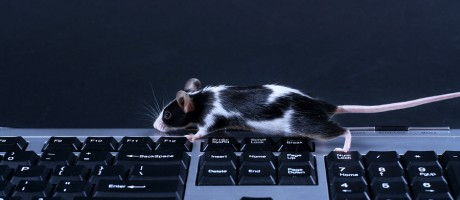 A mouse running across a keyboard.