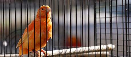A canary sitting on a perch in a cage.