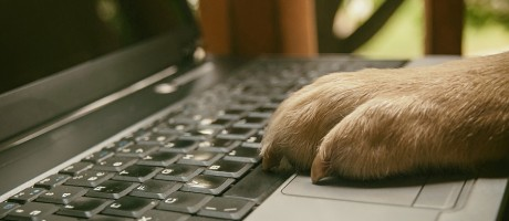A dog's paw on a laptop keyboard.