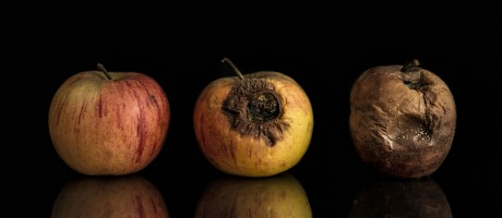 Fresh, rotting and decomposed apples are on display.