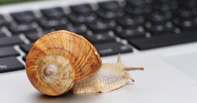 A snail on a computer.