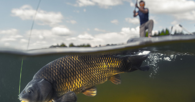 A fisherman catching a fish.
