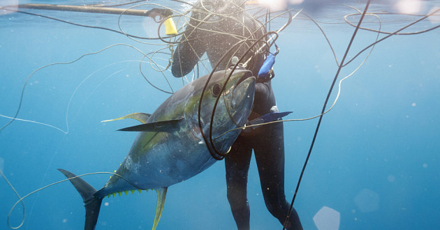 A diver spear fishing.
