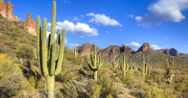 Cacti in an open field: fileless malware
